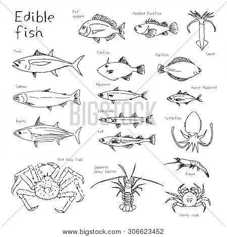 Type Of Edible Fishes, Hand Drawn Sketch Black And White Illustration (tuna, Bonito, Salmon, Red Sna