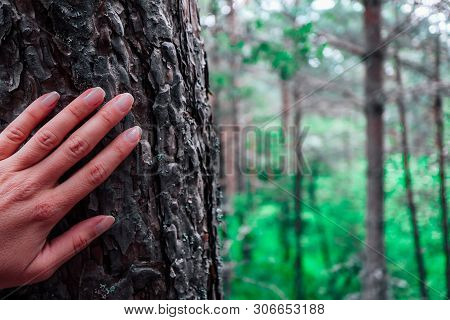 Woman Hand On The Pine Tree Trunk, Forest Background. Hiding In The Woods Concept.