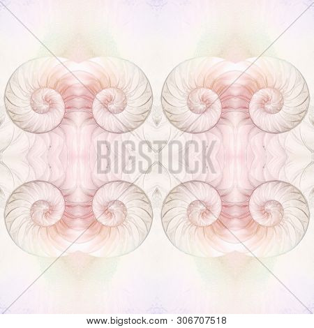 Сut Away Of A Chambered Nautilus Shell, Mother Of Pearl Shell, Popular Cephalopod. Abstract Backgrou
