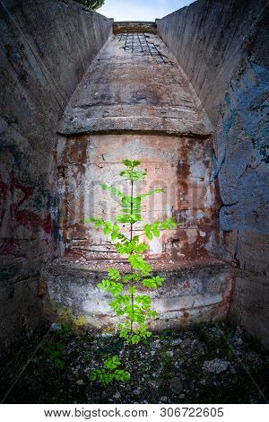 Plant In Abandoned Ruined Lost Place Port With Funicular To Bauxite Mine In Town Cere Near Rabac In
