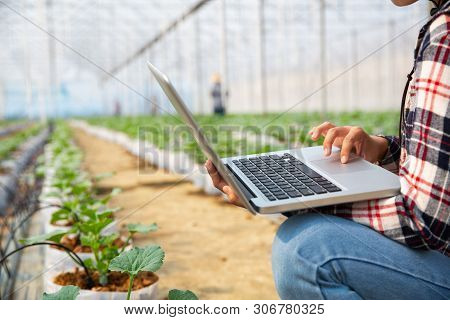 Agronomists And Farmers Are Inspecting Plants In A Greenhouse Farm With A Laptop, Farmers And Resear