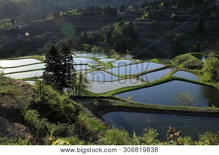 Terraced Rice Field In Yamakoshi, Nagaoka, Niigata, Japan