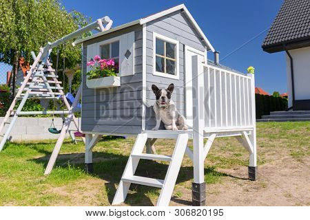 Beautiful wooden garden house for kids with the dog at the terrace