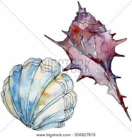 Summer Beach Seashell Tropical Elements. Watercolor Background Illustration Set. Isolated Shell Illu