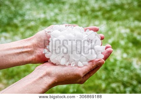Large Hails In Hands After Hailstorm In Summer