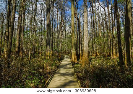 Boardwalk Trail In Congaree National Park In South Carolina, United States