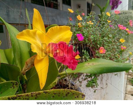 Orchid Flower In Orchid Garden At Winter Or Spring Day. Beautiful Orchid Flower In The Tropical Gard