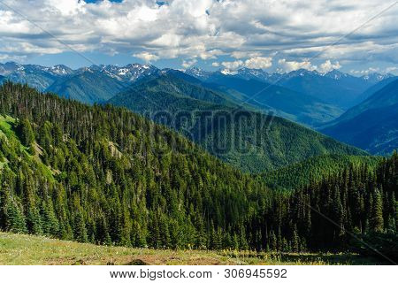 Hurricane Ridge In Olympic National Park In Washington, United States