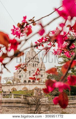 Paris, France - April 9, 2019: Basilique Du Sacre-coeur In Spring With Pink Sakura Bloom.