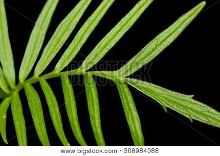 Small plant and fresh leaves on black background