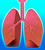 Illustration of human lungs in blue background poster