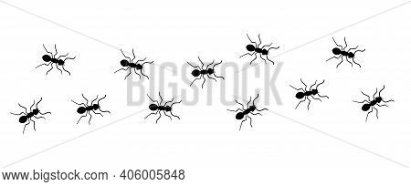 Ant Vector Trail Marching Illustration. Ant Bug Pest Control Background Teamwork