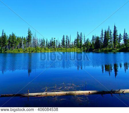 Mountain Water Log - A View Looking Across Island Lake - Near Santiam Pass - Cascade Range - Or