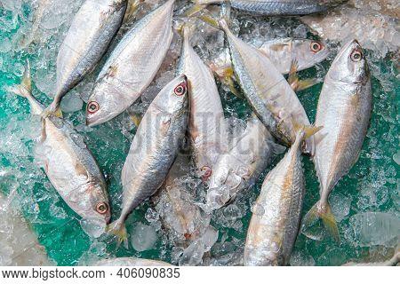 Fresh Saba Mackerel Fish On Ice In Supermarket. Top View Of Fresh Mackerel Or Saba On Ice For Sale.