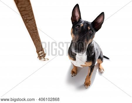 Dog Waiting For A Walk With Leash