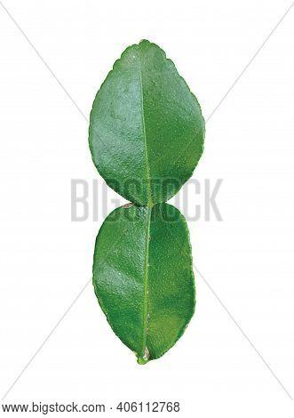 Kaffir Lime Leaf, Green Leaf Isolated On White Background