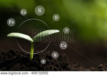 Mineral Fertilizer. Young Seedling Growing In Soil Outdoors, Closeup