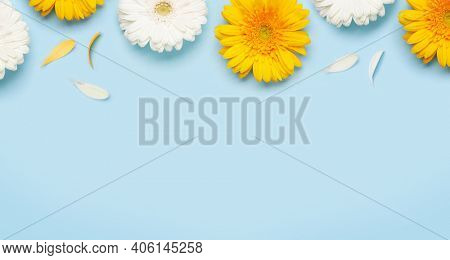 Colorful gerbera flowers over blue background. Spring card template. Top view flat lay with copy space
