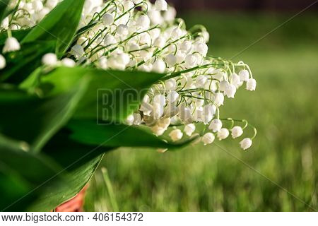 Lilies Of The Valley With Leaves In A Meadow Close Up. White Natural Bell. Fragrant Spring Beautiful