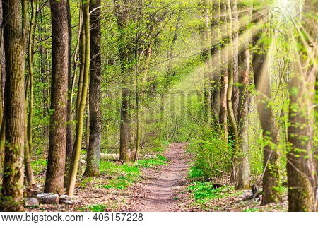 Green Spring Forest With First Spring Leaves, Sun Light And Path Through Green Trees