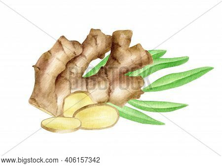 Watercolor Ginger Root With Slices And Leaves Arrangement. Hand Drawn Ginger Rhizome Composition Iso