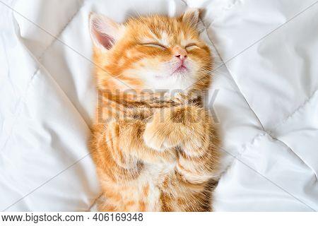 Portrait Of A Cute Kitten Scottish Straight Sleeping On The Bed