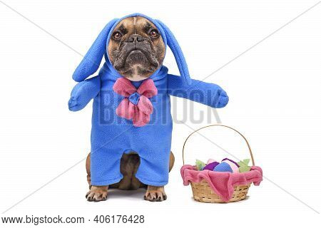 French Bulldog Dog Dressed Up With Easter Bunny Costume With Blue Full Body Suit Next To  Easter Bas