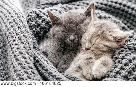 Couple Cute Kittens In Love Sleeping On Gray Soft Knitted Blanket. Cats Rest Napping On Bed Have Swe