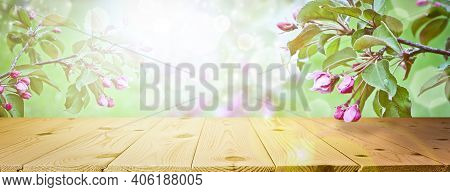 Spring And Summer Background - Blooming Apple Trees, Frame In The Rays Of Sunlight, With A Wooden Ta