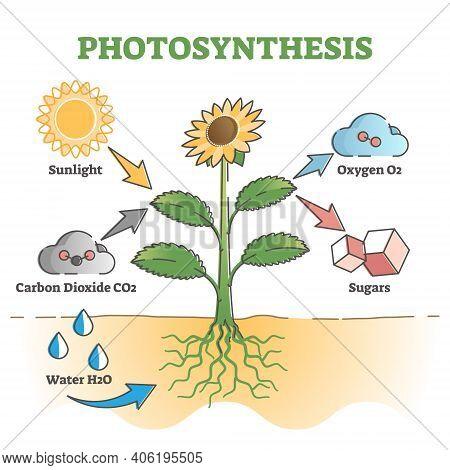 Photosynthesis Diagram Process Symbolic Explanation Scheme Outline Concept