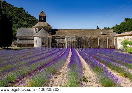 Senanque Abbey Gordes Provence Lavender Fields Notre-dame De Senanque, Blooming Purple-blue Lavender
