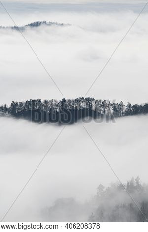 Islands Of Pine Hilltops Emerging Form Fog In Winter Time. Environment, Ecology, Climate Change And