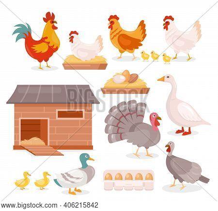 Chicken In Farm Barn Henhouse Isolated Set, Hen Sitting On Eggs, Turkey, Goose And Duck