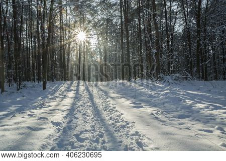 A Snow-covered Road In The Forest And Sunshine Between The Trees, Winter Landscape