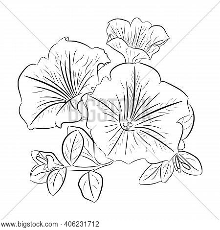 Petunia Flower, Graphics. A Simple Outline Drawing Of A Petunia.
