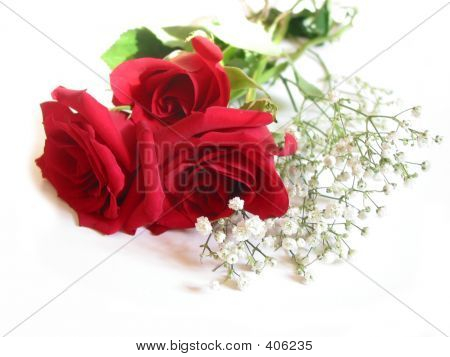 Rose Bouquet On White
