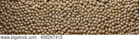Macro Of Soybeans. Soybean Texture Panoramic Background. Top View