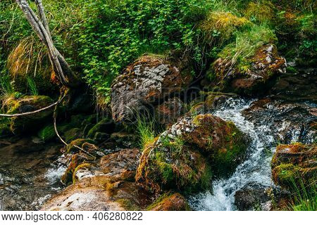 Scenic Landscape To Beautiful Greenery And Plant Roots On Mossy Boulders Near Small River. Rich Vege