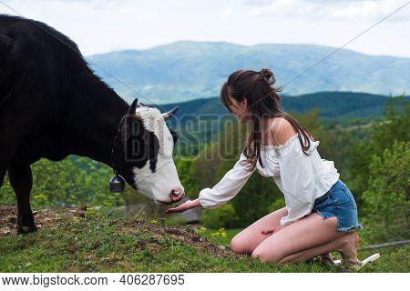 Happy Woman Feeding Cow. Girl Feeding Black And White Cow On Meadow. Vegan, Vegetarian Concept. Take