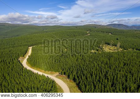 Aerial View Of A Dirt Road Running Through An Industrial Cultivated Pine Tree Farm In A Large Valley