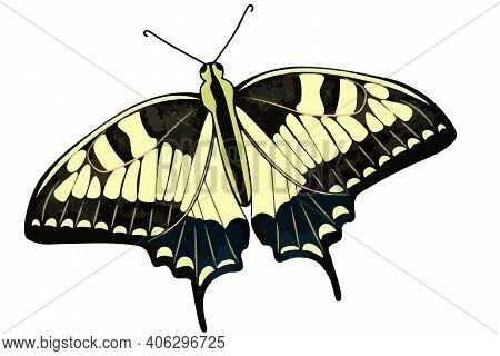 Lemongrass Butterfly Close Up. Vector Butterflies In Yellow Color. Insect Isolated .