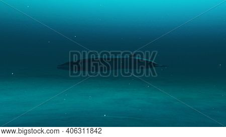 Closeup Up Of Rorqual Whale Swimming In The Deep Blue Ocean Water, Underwater Scene Of Rorqual Whale