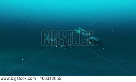 Group Of Tortoises Swimming In The Deep Blue Ocean Water, Slow Motion Underwater Scene Of Tortoises,