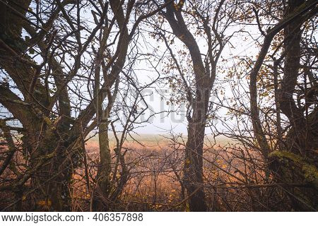 Wilderness Scenery With Trees With Thornes In A Rural Landscape Near A Field On A Rainy Day In The F