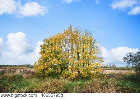 Colorful Autumn Scenery With Trees In Yellow And Green Colors On A Bright Day