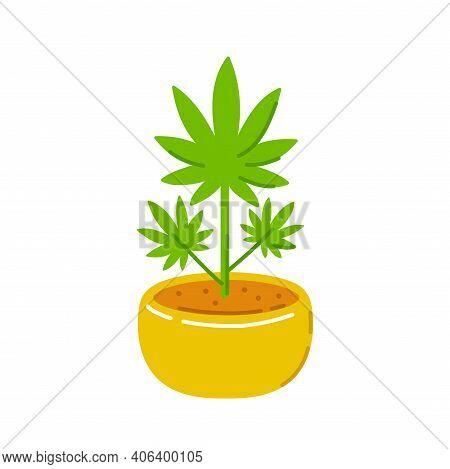Marijuana Weed Plant In Pot. Vector Trendty Flat Line Illustration Icon. Isolated On White Backgroun
