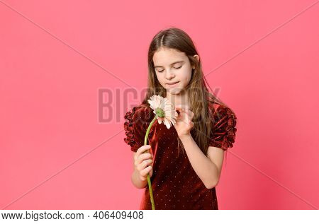 1 White Girl 10 Years Old In A Burgundy Dress With A Pink Gerbera Flower In Her Hands On A Pink Back