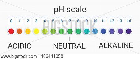 Ph Scale Value. Infographic Acid-base Balance. Scale For Chemical Analysis Acid Base. Vector Illustr