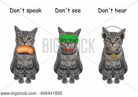 Three Gray Cats Covering Its Eyes, Ears And Mouth Like Three Wise Monkeys. Don't Speak, See And Hear