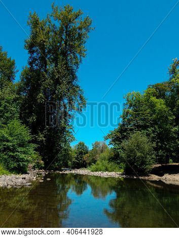 Trees By The Water - A Summer Scene Along Crabtree Creek At Larwood County Park - Near Lacomb, Or
